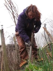 Hier plant ik een Krulrus, een vochtslurper annex sierplant