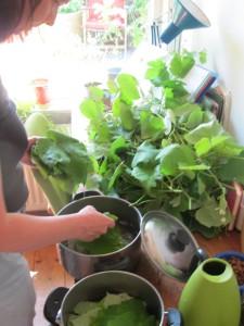 In juli heb je dan weer lekker snoeisel van je druiven om van de jonge blaadjes dolma's te maken!