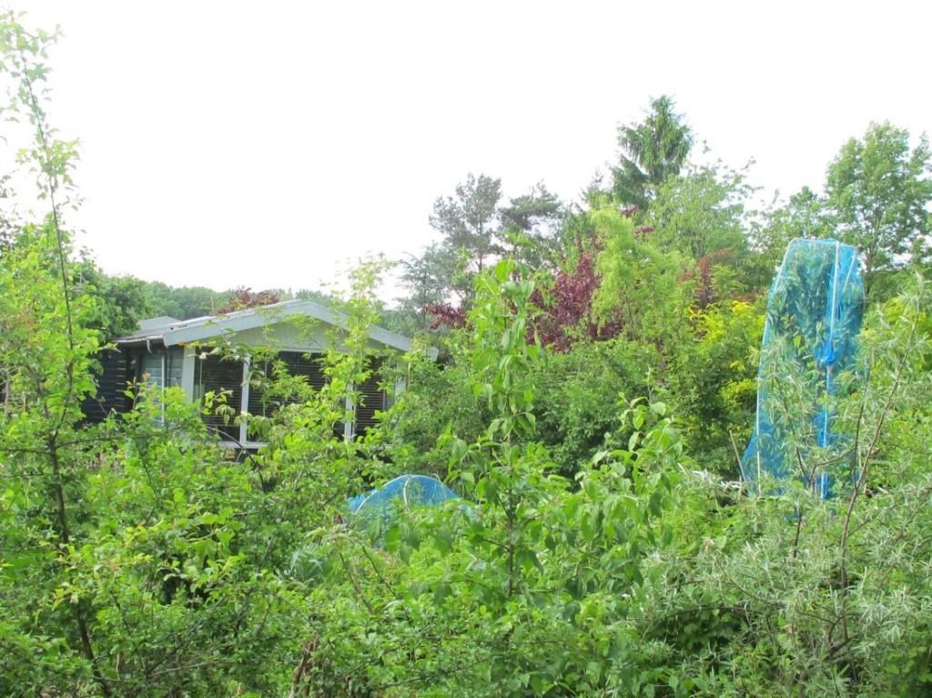 Het voedselbos dat in deze blogpost beschreven staat. Foto 1 juni 2015