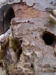 Halfverteerd hout is gunstig voor insecten en naarmate het verder verteert voegt het organisch materiaal toe aan de bodem, wat goed is  voor de waterhuishouding