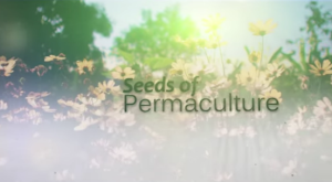 Seeds of permaculture - movie - screenshot