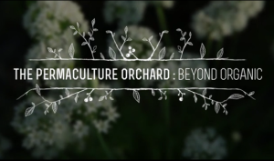 The Permaculture Orchard - movie - screenshot